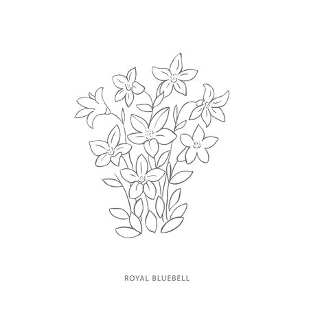 royal bluebell flower.Plant design elements. Botanical .