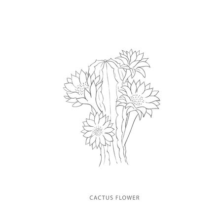 cactus flower.Plant design elements. Botanical .