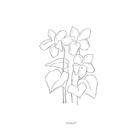 violet flower.Plant design elements. Botanical .