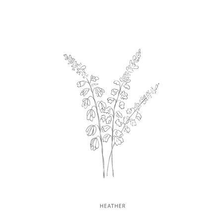 heather flower.Plant design elements. Botanical .