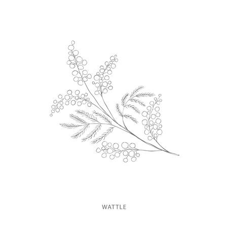 wattle flower.Plant design elements. Botanical .