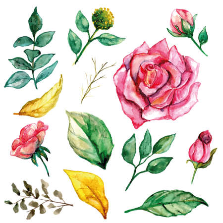 Pink rose set with greenery watercolor