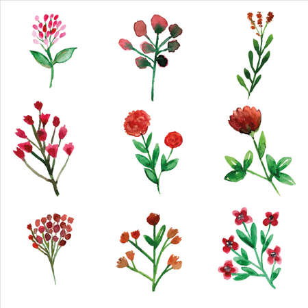 Set of wild red flower and leaves watercolor of spring season for greetings card or invitation card decorations
