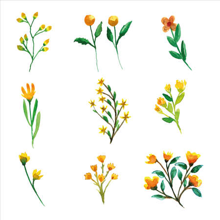 Set of wild yellow flower and leaves watercolor of spring season for greetings card or invitation card decorations