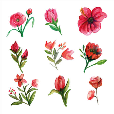 Set of fresh wild flower pinkish watercolor for decorations of spring seasons