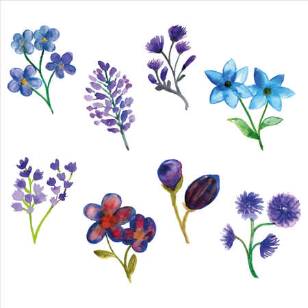 Set of purple and blue wild flower watercolor of spring season for greetings card or invitation card decorations 矢量图像