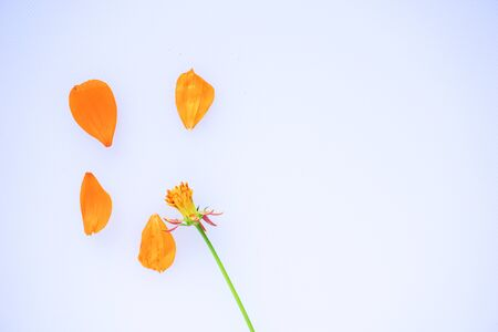 flower petals on white background. Top view. Copy space for text Banco de Imagens - 150092323