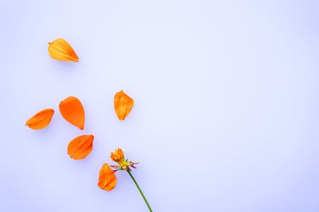 fresh flower petals on white background. Top view. Copy space for text Banco de Imagens - 150092326