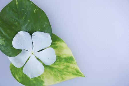 copy space with leaves and white flower on white background for summer concept. Creative flat lay with copy space. Top view tropical green leaf 写真素材