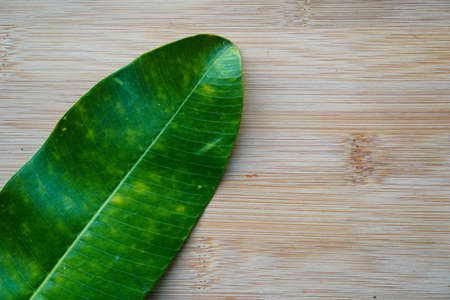 Green yellow leaf on rustic wooden background Archivio Fotografico