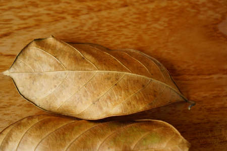 dried leaves on black isolated background. autumnal concept background, copy space