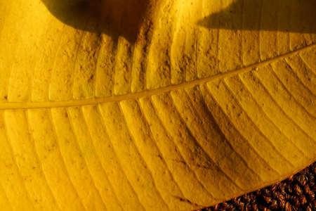 autumn yellow leaves close up. autumnal season concepts background Banco de Imagens - 154735291