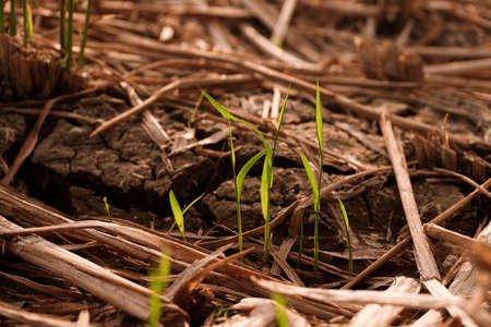 Dry and cracked soil after harvesting. Climate change concept, nature background Banco de Imagens - 154956856