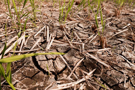 Dry and cracked soil after harvesting. Climate change concept, nature background Banco de Imagens - 154956933