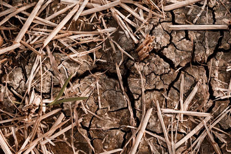 Dry and cracked soil after harvesting. Climate change concept, nature background Banco de Imagens