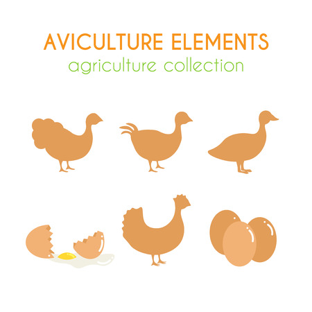 Aviculture vector set. Poultry industry illustration. Chicken eggs and turkey. Quail and duck. Domectic birds. Flat argiculture collection.