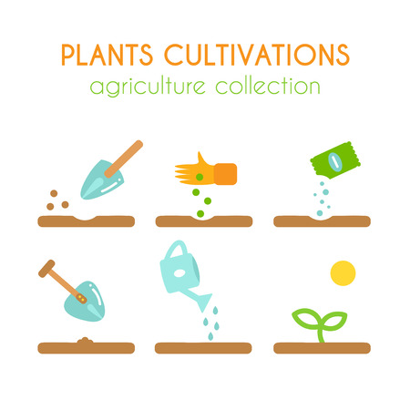 growing plant: Vector plant cultivation. Growing plant illustration. Sowing and planting process infographic design. Flat argiculture collection.