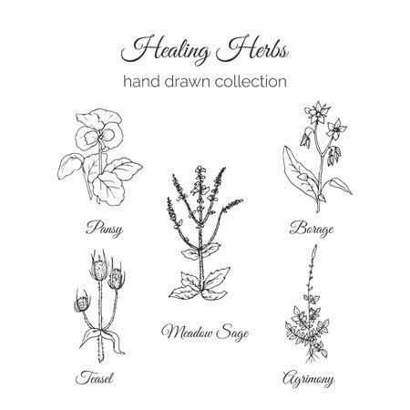 ホリスティック医学。癒しのハーブのイラスト。手描き草原セージ、キンミズヒキ、ルリヂサ、パンジー、シャイニークロームチーゼル。健康と自