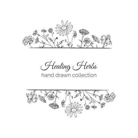calendula: Holistic Medicine. Healing Herbs Illustration. Handdrawn Aloe vera, Arnica, Calendula, Chamomile and Coriander. Health and Nature collection. Vector Ayurvedic Herb. Herbal Natural Supplements.
