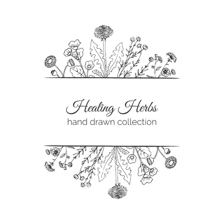 holistic health: Holistic Medicine. Healing Herbs Illustration. Handdrawn Health and Nature collection. Vector Ayurvedic Herb. Herbal Natural Supplements. Organic print design. Isolated on white background.
