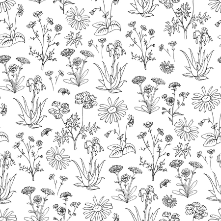 arnica: Healing Herbs Seamless Pattern. Holistic Medicine Print. Handdrawn Aloe vera, Arnica, Calendula, Chamomile and Coriander. Health and Nature collection. Vector Illustration of Ayurvedic Herb. Illustration Illustration