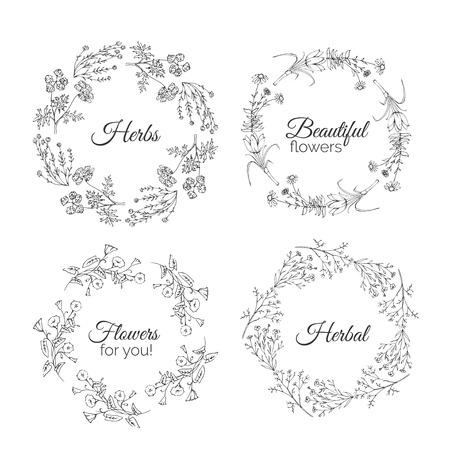 bindweed: Herbs Illustration. Floral frames. Calendula, Cotton, Bindweed, Shaffran, Flax, Echinacea. Handdrawn Health and Nature collection. Vector Ayurvedic Set. Holistic Medicine. Healing plants.