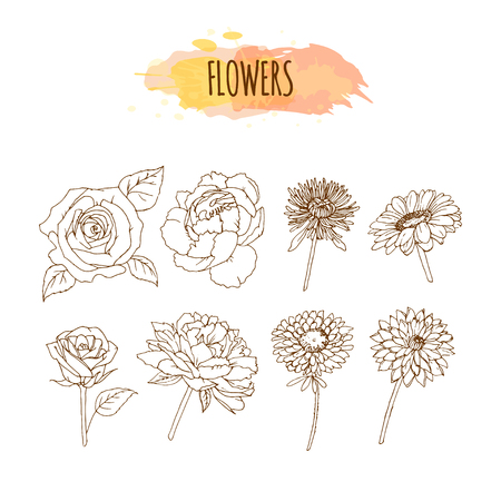 aster: Hand Drawn Flower Set. Floral Illustration. Sketch of Chrysanthemum, Roses, Aster, Camelia, Peony and Dahlia