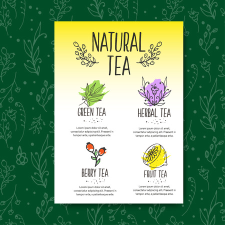 camomile tea: Herbal tea menu brochure. Organic herbs and wild flowers. Hand sketched fruits and berries illustration. Flower and leaves branches. Floral vector design.