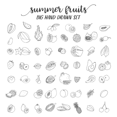 Fruits on white background. Vector illustration Illustration