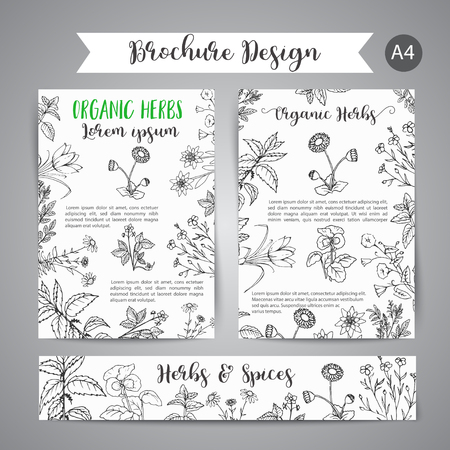 Vector wild flowers and herbs banners set.Hand drawn herbal design with spices, medicinal, cosmetic plants. Illustration for beauty store advertising, brochures, flyers, cosmetology promotion