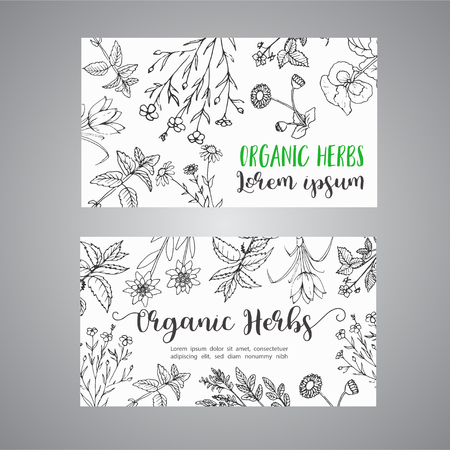 Herbs and Wild Flowers. Hand drawn herbal design with spices, medicinal, cosmetic plants. Illustration for advertising, brochures, flyers, modern promotion.