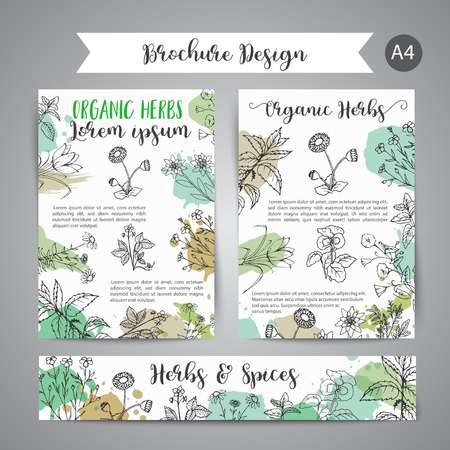 Hand drawn herbal design with spices, medicinal, cosmetic plants.