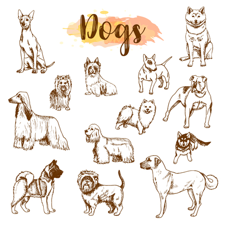 Hand drawn dogs breeds set. Sketch of dog isolated on white background Vector Freehand drawing illustration in vintage style