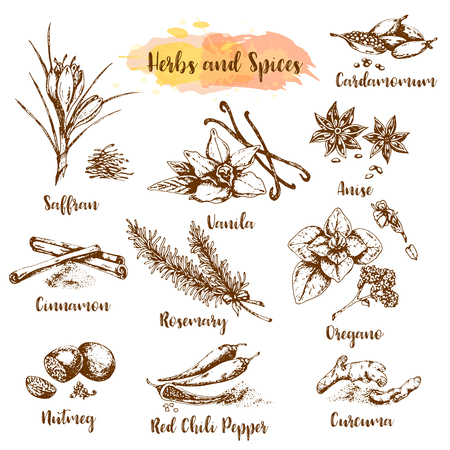 Herbs and spices vector illustration. Herb, plant, spice hand drawn set. Organic healing herbs engraving. Vector botanical sketches. Vanila, oregano, shaffran and cinnamon illustrations
