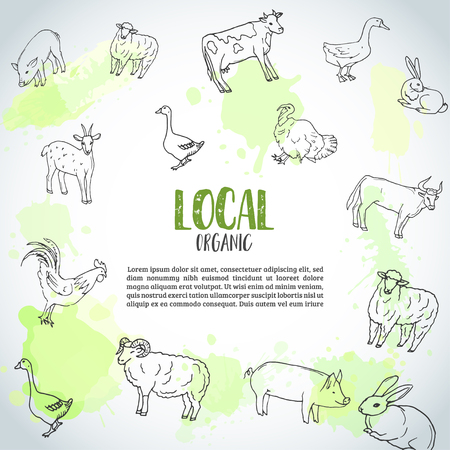Hand drawn farm animals background. Farming illustration. Local farm text. Hand sketched goose, rooster, chicken