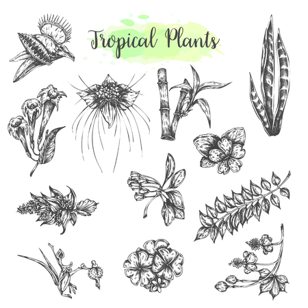Tropical collection with exotic flowers and leaves. Botanical set with tropic plants. Bamboo and Dionaea muscipula vector