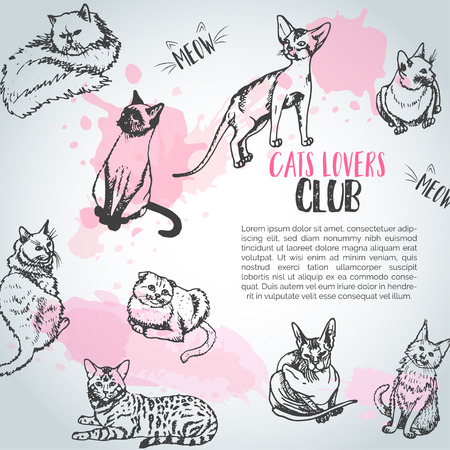 Background with cat breeds. Cats lovers club Cute kitten sketch Vector Illusztráció