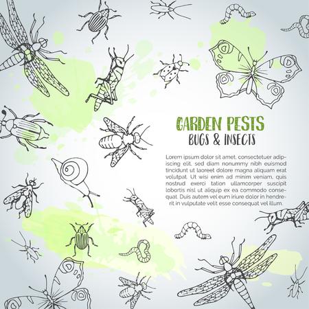 Insectos insectos fondo dibujado a mano. Concepto de control de plagas. Cartel de entomología. Ilustración de dibujos animados de plagas y errores. Conceptos de ilustración vectorial para web