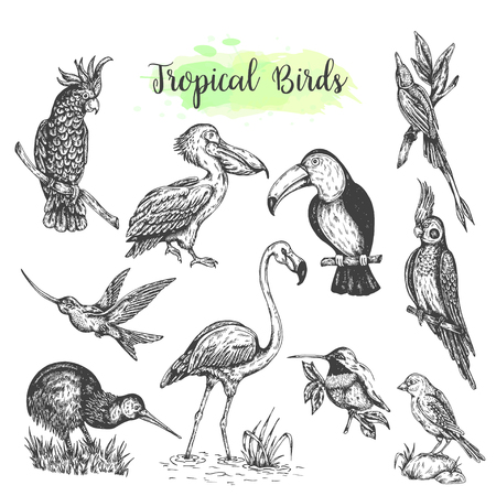 Exotic tropical birds vector Hand drawn parrot. Sketch style toucan, flamingo, cockatoo. Vector isolated bird Stock Illustratie