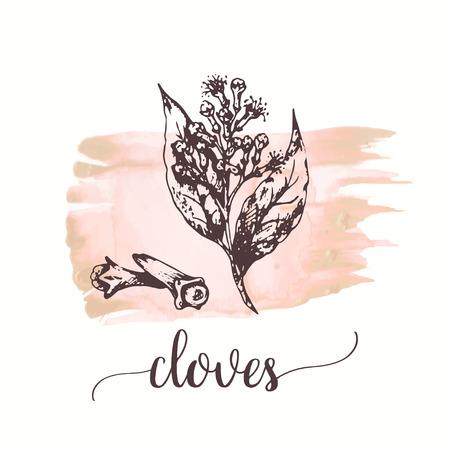Cloves sketch on watercolor paint. Vector black vintage engraving illustration Vector design for cards, packaging, promo