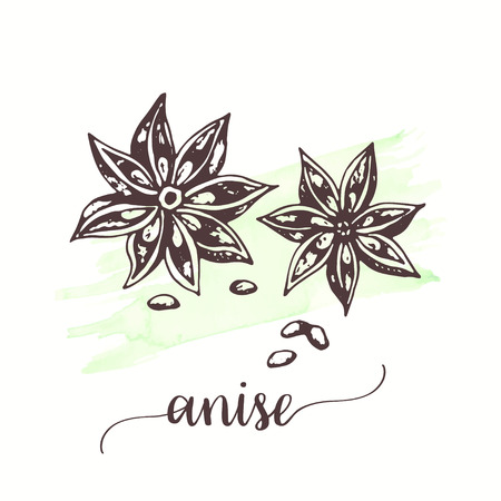 Anise Vector illustration for tags, cards, packaging, promo for restaurant, menu, cuisine spice sketch style Winter spices