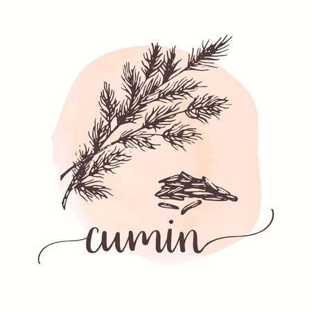 Cumin sketch on watercolor paint. Hand drawn ink illustration of spice Vector design for tags, cards, packaging, promo