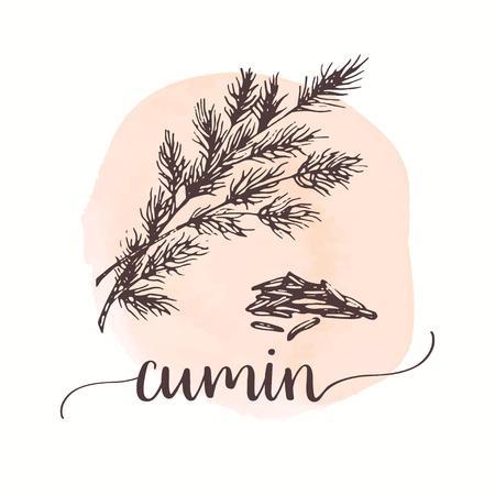 Schizzo di cumino su pittura ad acquerello. Illustrazione disegnata a mano dell'inchiostro della spezia Disegno vettoriale per tag, carte, imballaggi, promo,