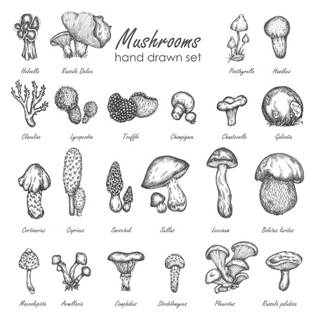 Illustration vectorielle de champignon dessinés à la main. Champignons vector set truffe, chanterelle, champignon, enokitake