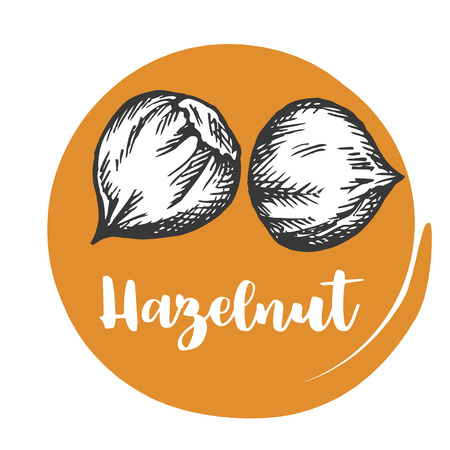Seeds and nuts Vintage hand drawing of hazelnut Vector illustration
