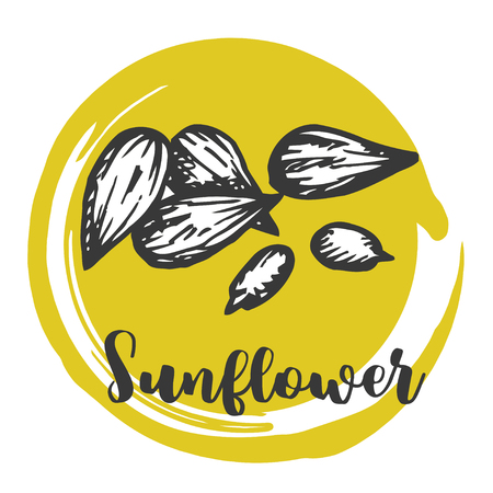 Sunflower seed Vintage hand drawing of seeds Vector illustration Retro design