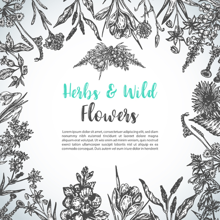 Background with Hand drawn herbs and wild flowers Vintage collection of Plants Floral invitation Vector illustrations in sketch style Illustration