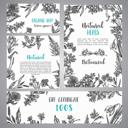 Hand drawn herbs and wild flowers banner Vintage collection of Plants Vector illustrations in sketch style
