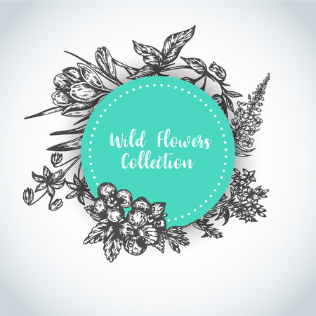 Background Hand drawn herbs and wild flowers Vintage collection of Plants Vector illustrations in sketch style