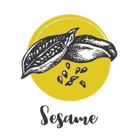 Sesame seed vector drawing. Hand drawn food ingredient. Sketch of seeds Vector illustration